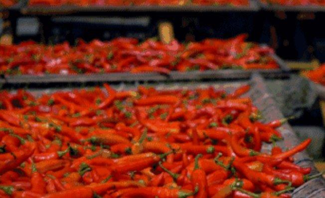 史上最辣辣椒排名,比印度魔鬼椒辣出三倍的竟然是它!